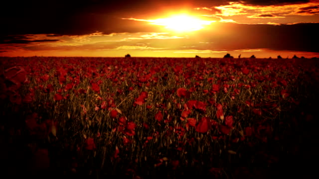 Dramatic sky over the poppy fields video