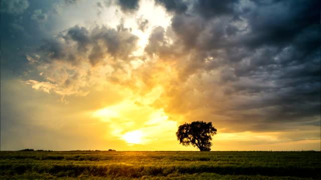 dramatisk solnedgång på ett fält, timelapse video - single pampas grass bildbanksvideor och videomaterial från bakom kulisserna