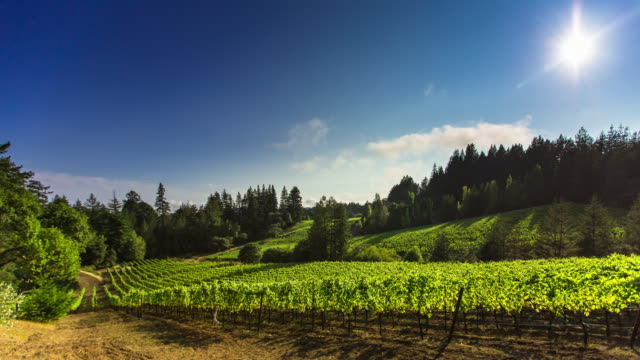 Dramatic Windy Day in California Winery - Time Lapse video