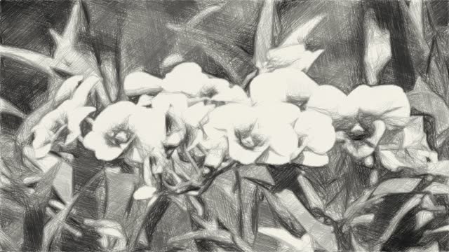 drawing black and white of orchid flower