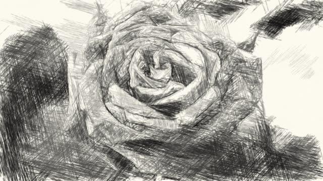 ritning svart och vit av rosen blomma - white roses bildbanksvideor och videomaterial från bakom kulisserna