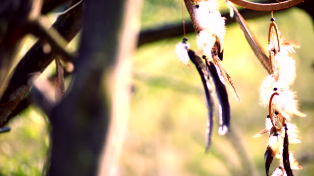 dream catcher in the wilderness in autumn video
