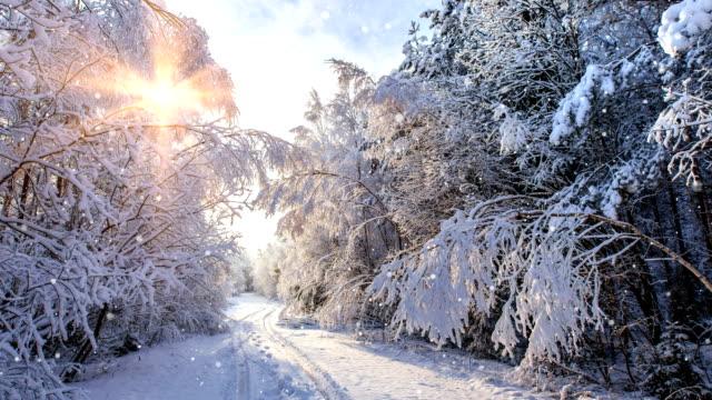 vídeos de stock e filmes b-roll de dream forest - loop 4k - inverno