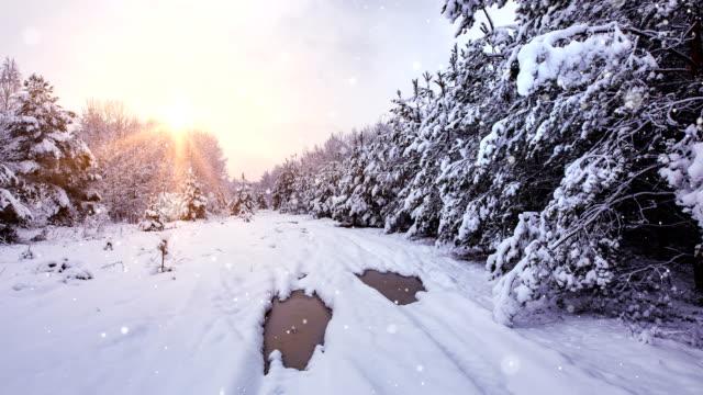 träumen wald - 4k-schleife - schneeflocke sonnenaufgang stock-videos und b-roll-filmmaterial