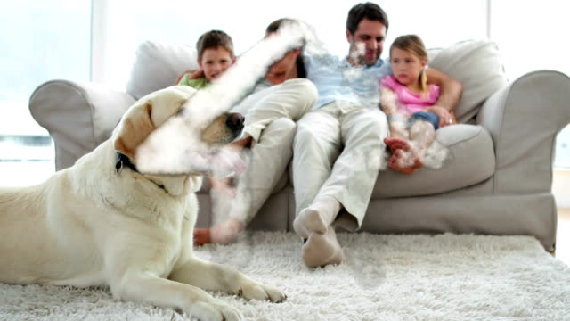 Dream house and family with dog