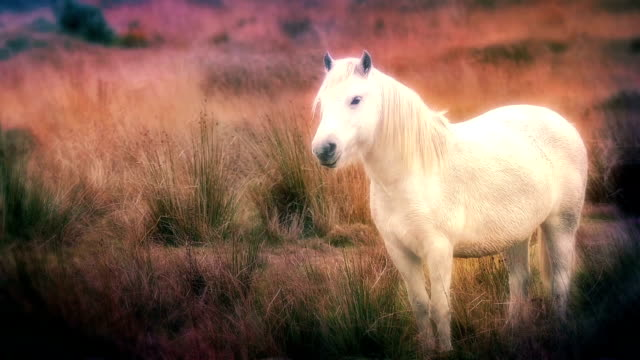 Dreamlike Vision Of White Horse video