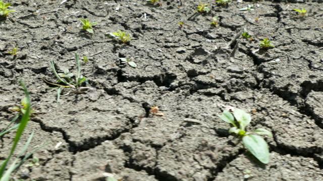 vídeos de stock, filmes e b-roll de chão de colheita seca e rachada - seco