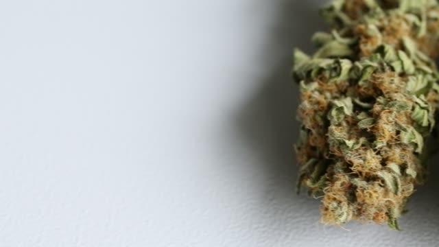 Dried Cannabis Flower on white background