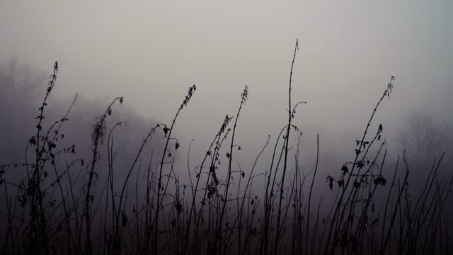 dried grass during the fog in the morning