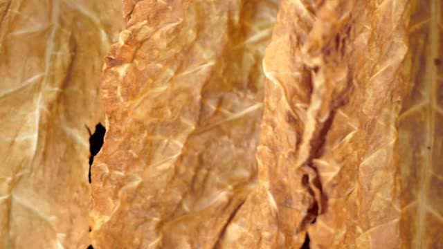 dried leaf smoking tobacco in summer close-up - sigaro video stock e b–roll