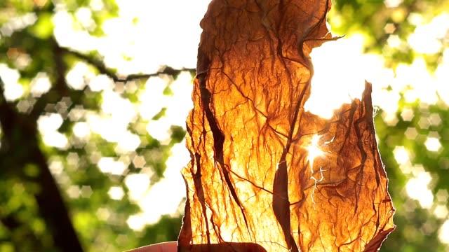kurutulmuş yaprak yaz yakın çekim tütün sigara - tütün mamulleri stok videoları ve detay görüntü çekimi