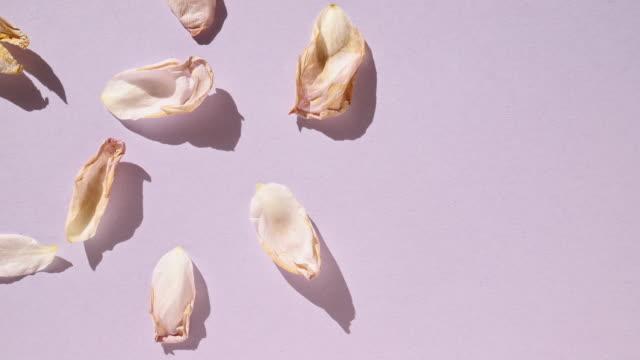 Dried petals time lapse