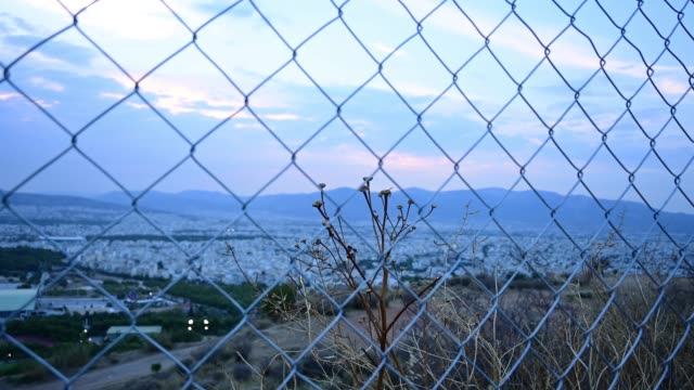 Dried plant behind a wire fence shakes in the wind at dusk.
