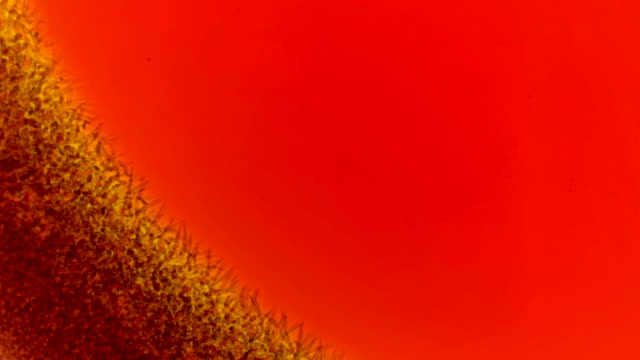 dried red liquid similar to blood under the microscope dries quickly,shot in time lapse dried red liquid similar to blood under the microscope dries quickly,shot in time lapse FullHD blood clot stock videos & royalty-free footage