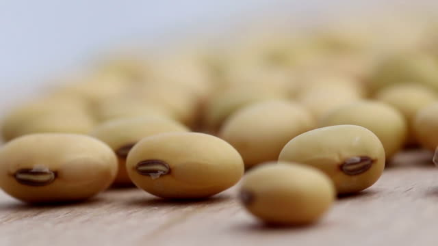 Dried soybeans video
