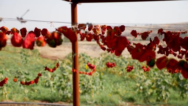 vídeos y material grabado en eventos de stock de verduras y pimientos secos - cayena guindilla roja
