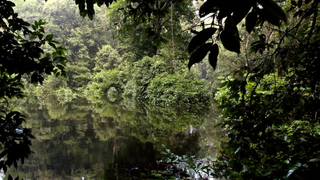 Drifting through an Amazonian oxbow lake video