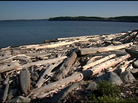 Driftwood beach in Pacific Northwest video