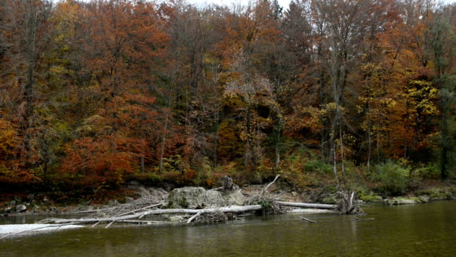 Driftwood on a sandbank. Autumn landscape of Isar river next to Pullach in Bavaria. Near Munich. (Germany) video
