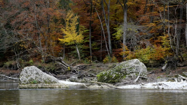 Driftwood on a sandbank. Autumn landscape of Isar river next to Pullach in Bavaria. Near Munich. (Germany) – film