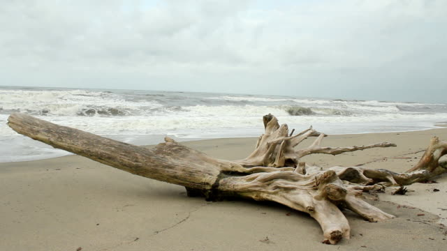 Driftwood on Beach video