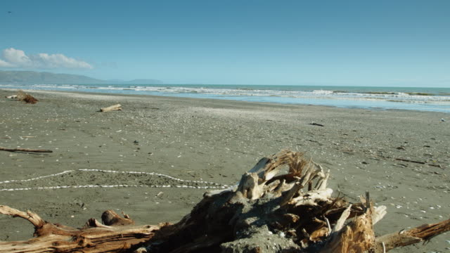 Driftwood on Deserted Beach video