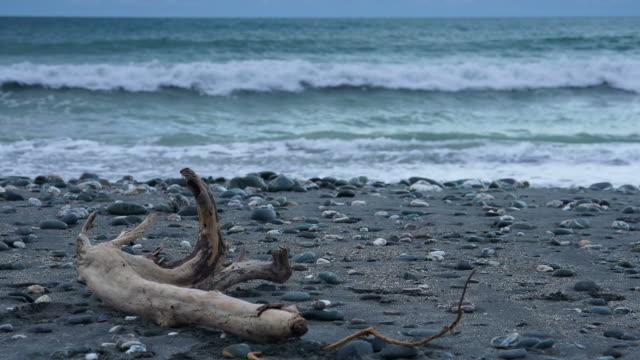Driftwood video