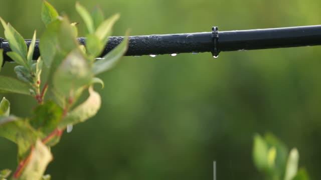 vidéos et rushes de méthode d'irrigation pipe - arroser