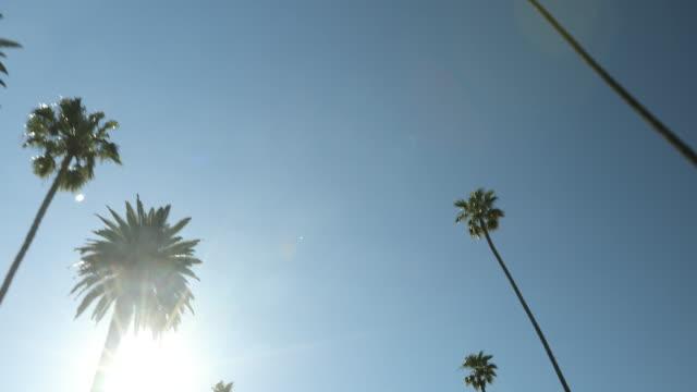 vidéos et rushes de continuez sur une rue bordée de palmiers ensoleillé hollywood californie usa - californie du sud