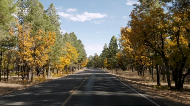 Drive On Road Through Pines Forest On Autumn Sunny Day In Grand Canyon Park