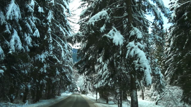 POV Drive Through Winter Forest Drive through winter forest shot from car point of view.   Shot with LEICA Summilux-R 35mm f/1.4 lens.  sicherheit stock videos & royalty-free footage