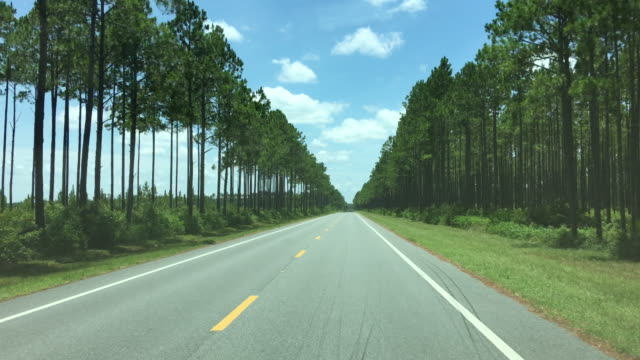 Driver view down paved highway through party harvested pine forest