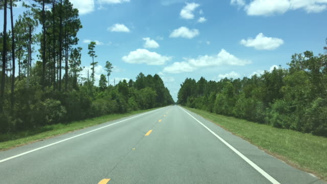 Driver view down paved highway through pine forest