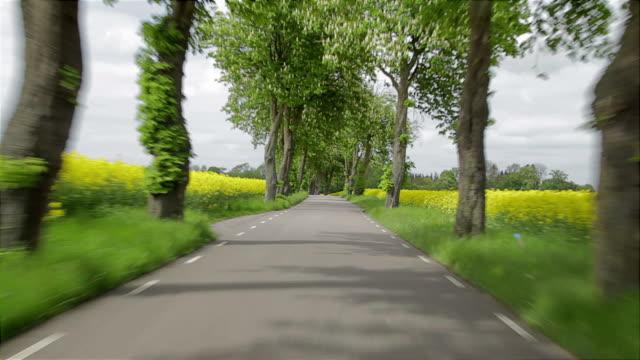 driving a car through an avenue of trees - summer sweden bildbanksvideor och videomaterial från bakom kulisserna