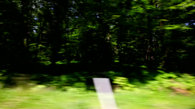 Driving a car through the forest video