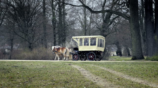 driving carriage with two horses - cocchio video stock e b–roll