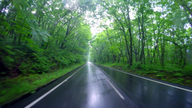 Driving Country Road in the rain