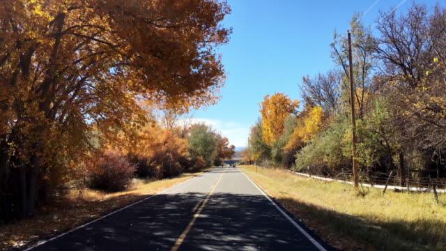 jazda w dół drogi jesienią w kolorado, podczas gdy stado jeleni cross road w słoneczny dzień - jeleniowate filmów i materiałów b-roll