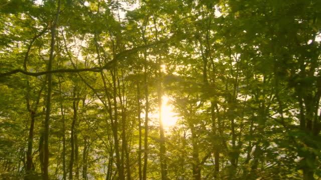 vídeos de stock e filmes b-roll de driving forest road - driveway, no people