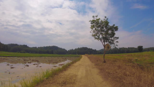 Driving In Beautiful Rice Field , Thailand video