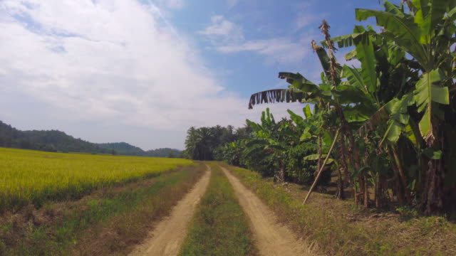 Driving In Beautiful Rice Field video
