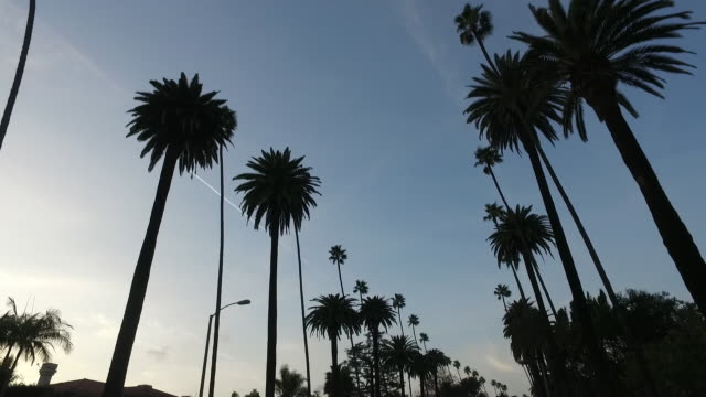 Driving in Los Angeles city streets