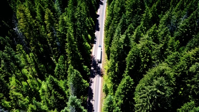 driving in the forest in the washington state