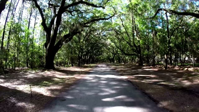Driving in the forest Driving in oak road south carolina stock videos & royalty-free footage