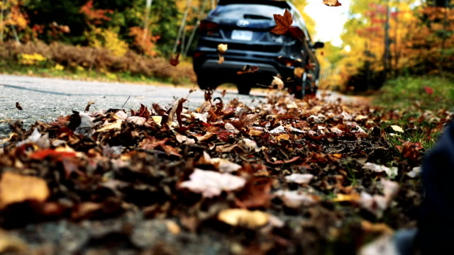 Driving in the leaves in Canada during fall video