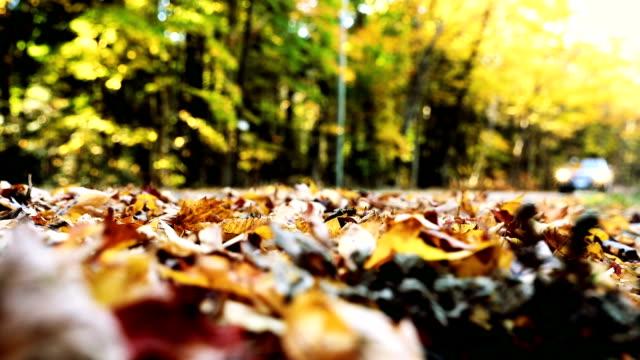 Conducción en las hojas en Canadá durante el otoño - vídeo