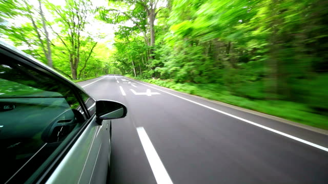 Driving into forest video