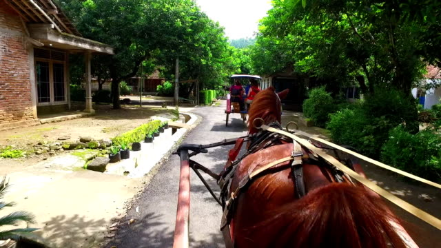 Driving on a horse cart through the countryside from Java Indonesia video