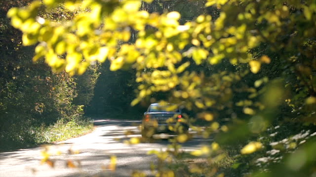 Driving on a road in the autumn forest. video
