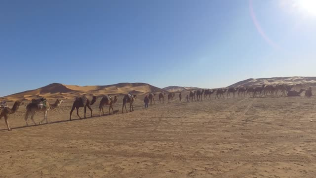 Driving on a road in the desert and meet a camel caravan in the desert. Filming from the car like a Drone.